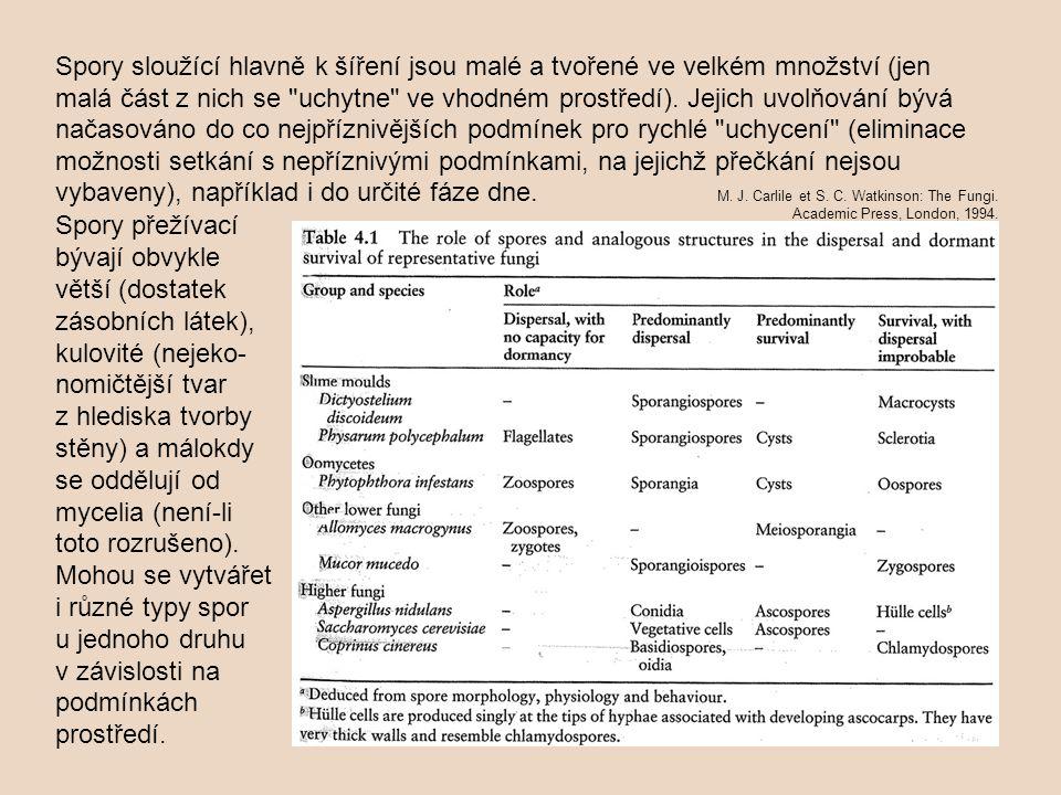 korémie = synnemata jsou vztyčené svazky konidioforů /odpov.