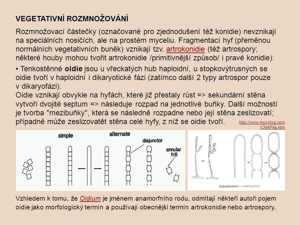 VEGETATIVNÍ ROZMNOŽOVÁNÍ Rozmnožovací částečky (označované pro zjednodušení též konidie) nevznikají na speciálních nosičích, ale na prostém myceliu.
