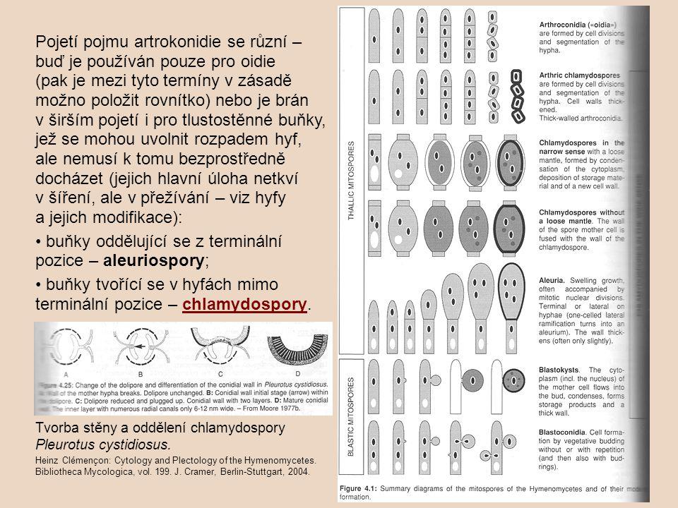 Ve sporangiích (sensu stricto) se tvoří nepohyblivé spory = aplanospory.