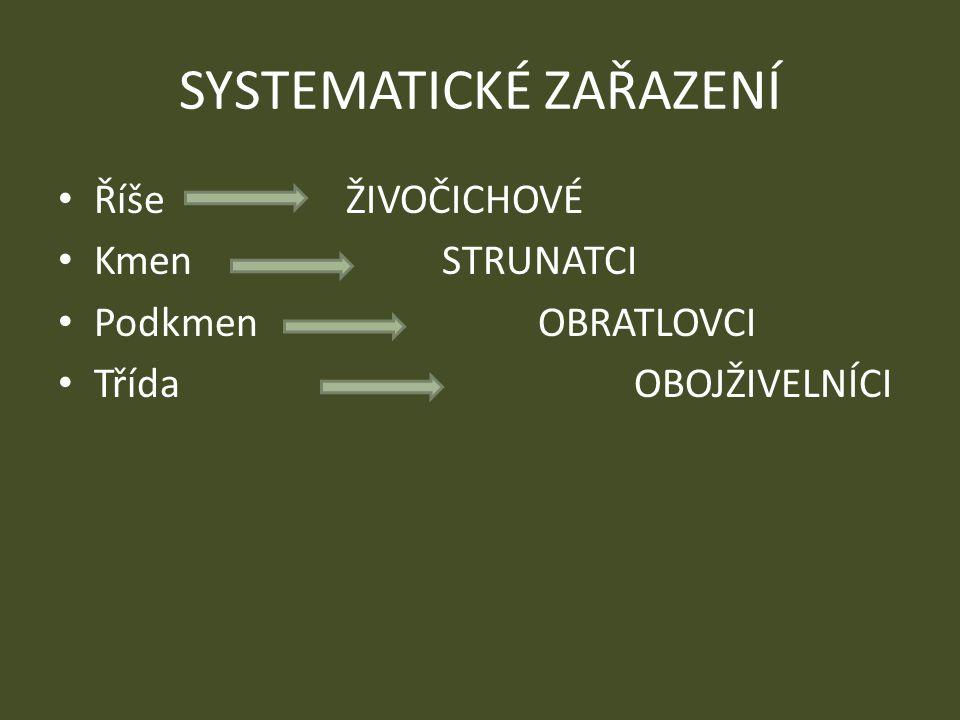 SYSTEMATICKÉ ZAŘAZENÍ Říše ŽIVOČICHOVÉ Kmen STRUNATCI Podkmen OBRATLOVCI TřídaOBOJŽIVELNÍCI