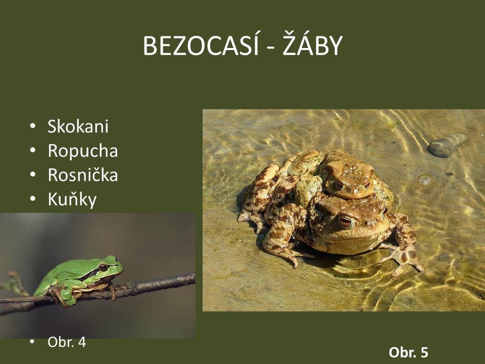BEZOCASÍ - ŽÁBY Skokani Ropucha Rosnička Kuňky Obr. 4 Obr. 5