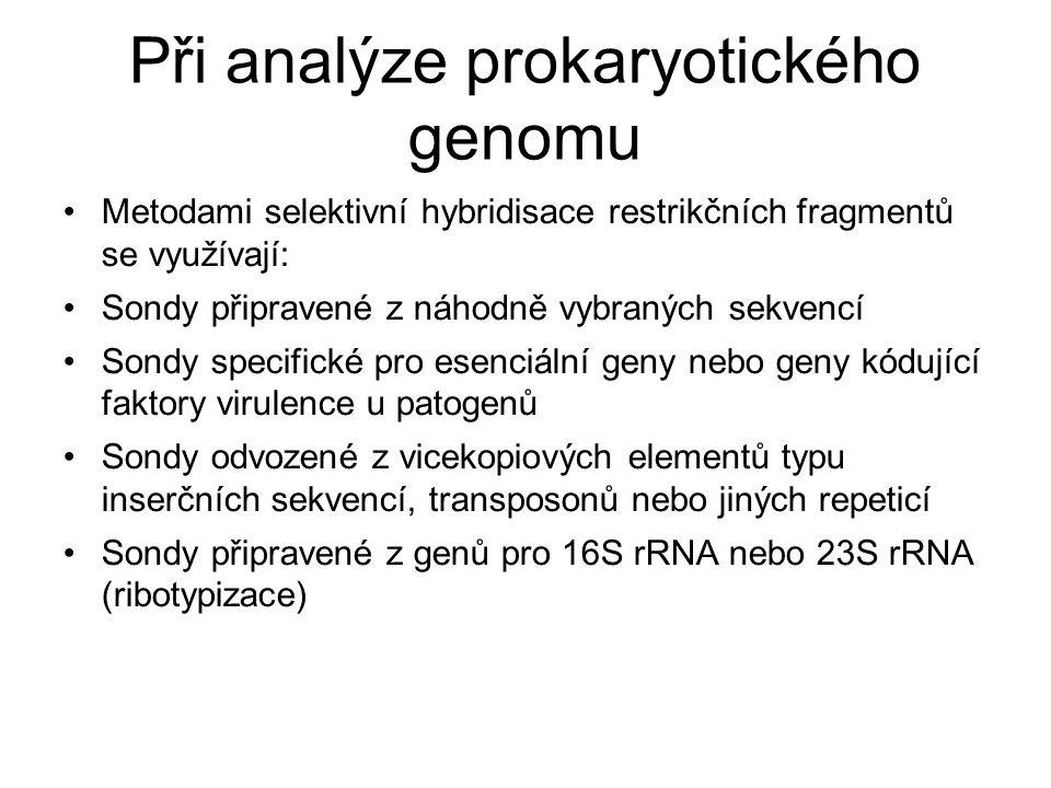 Při analýze prokaryotického genomu Metodami selektivní hybridisace restrikčních fragmentů se využívají: Sondy připravené z náhodně vybraných sekvencí Sondy specifické pro esenciální geny nebo geny kódující faktory virulence u patogenů Sondy odvozené z vicekopiových elementů typu inserčních sekvencí, transposonů nebo jiných repeticí Sondy připravené z genů pro 16S rRNA nebo 23S rRNA (ribotypizace)