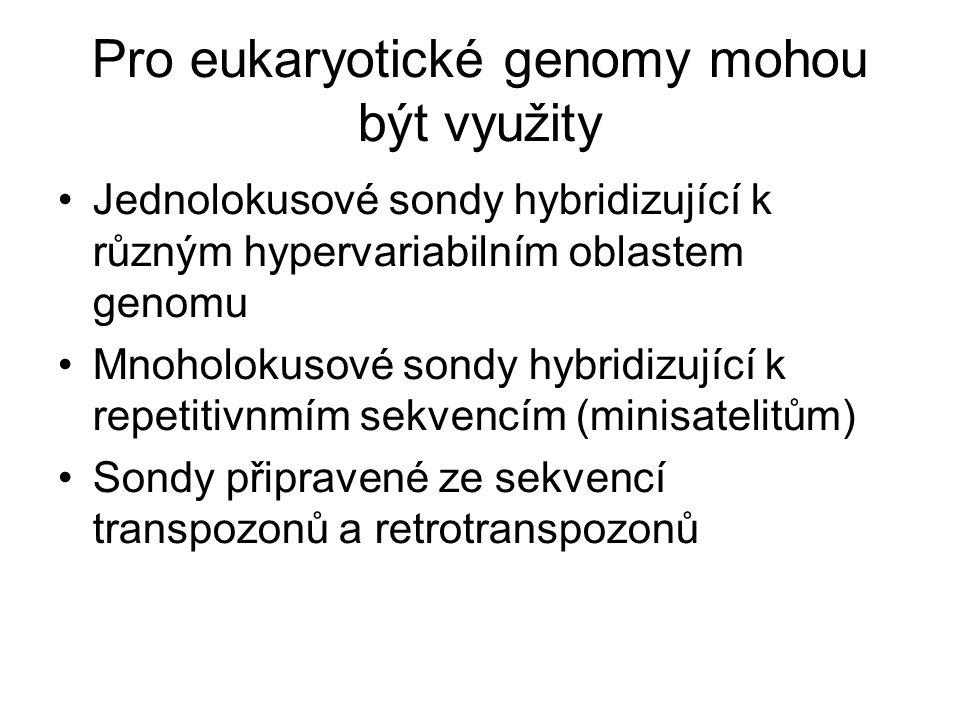 Pro eukaryotické genomy mohou být využity Jednolokusové sondy hybridizující k různým hypervariabilním oblastem genomu Mnoholokusové sondy hybridizující k repetitivnmím sekvencím (minisatelitům) Sondy připravené ze sekvencí transpozonů a retrotranspozonů