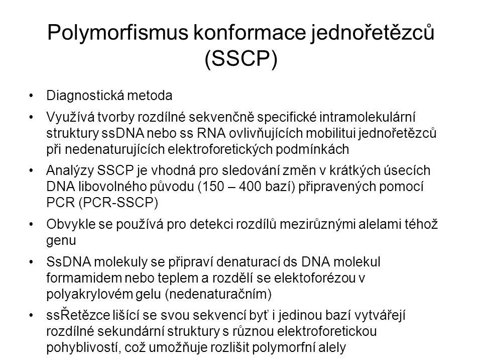 Polymorfismus konformace jednořetězců (SSCP) Diagnostická metoda Využívá tvorby rozdílné sekvenčně specifické intramolekulární struktury ssDNA nebo ss RNA ovlivňujících mobilitui jednořetězců při nedenaturujících elektroforetických podmínkách Analýzy SSCP je vhodná pro sledování změn v krátkých úsecích DNA libovolného původu (150 – 400 bazí) připravených pomocí PCR (PCR-SSCP) Obvykle se používá pro detekci rozdílů mezirůznými alelami téhož genu SsDNA molekuly se připraví denaturací ds DNA molekul formamidem nebo teplem a rozdělí se elektoforézou v polyakrylovém gelu (nedenaturačním) ssŘetězce lišící se svou sekvencí byť i jedinou bazí vytvářejí rozdílné sekundární struktury s různou elektroforetickou pohyblivostí, což umožňuje rozlišit polymorfní alely