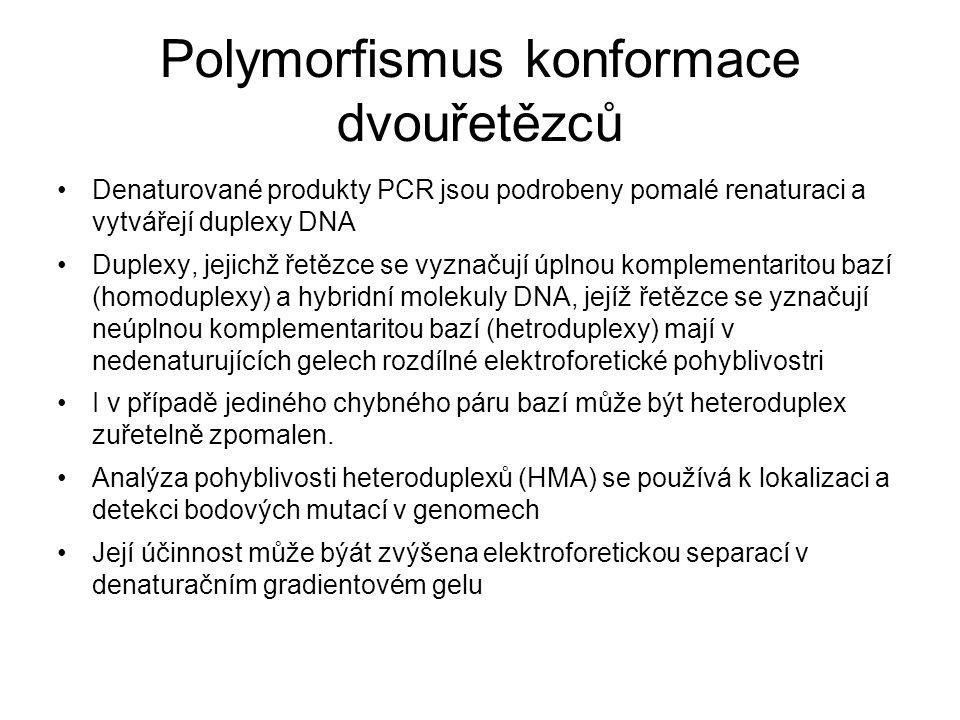 Polymorfismus konformace dvouřetězců Denaturované produkty PCR jsou podrobeny pomalé renaturaci a vytvářejí duplexy DNA Duplexy, jejichž řetězce se vyznačují úplnou komplementaritou bazí (homoduplexy) a hybridní molekuly DNA, jejíž řetězce se yznačují neúplnou komplementaritou bazí (hetroduplexy) mají v nedenaturujících gelech rozdílné elektroforetické pohyblivostri I v případě jediného chybného páru bazí může být heteroduplex zuřetelně zpomalen.