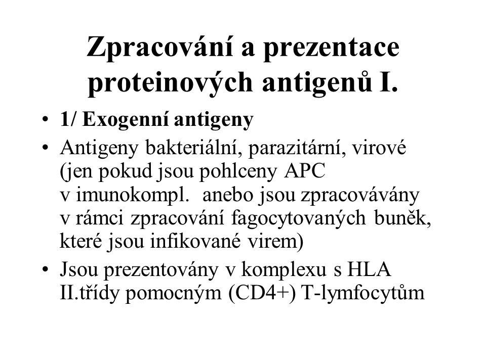 Zpracování a prezentace proteinových antigenů I. 1/ Exogenní antigeny Antigeny bakteriální, parazitární, virové (jen pokud jsou pohlceny APC v imunoko