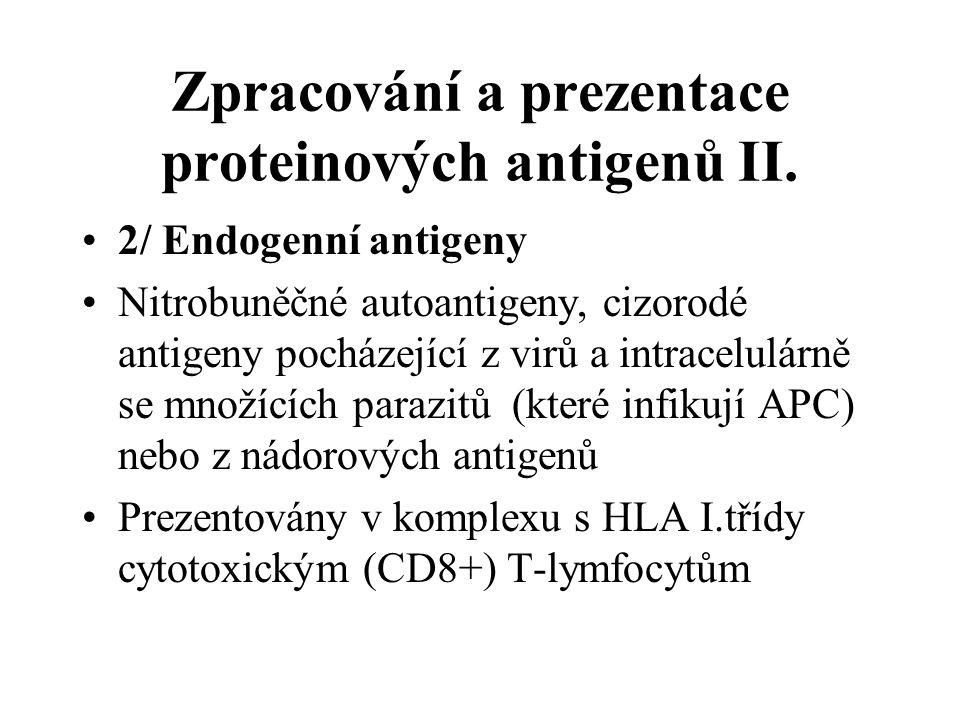 Zpracování a prezentace proteinových antigenů II. 2/ Endogenní antigeny Nitrobuněčné autoantigeny, cizorodé antigeny pocházející z virů a intracelulár