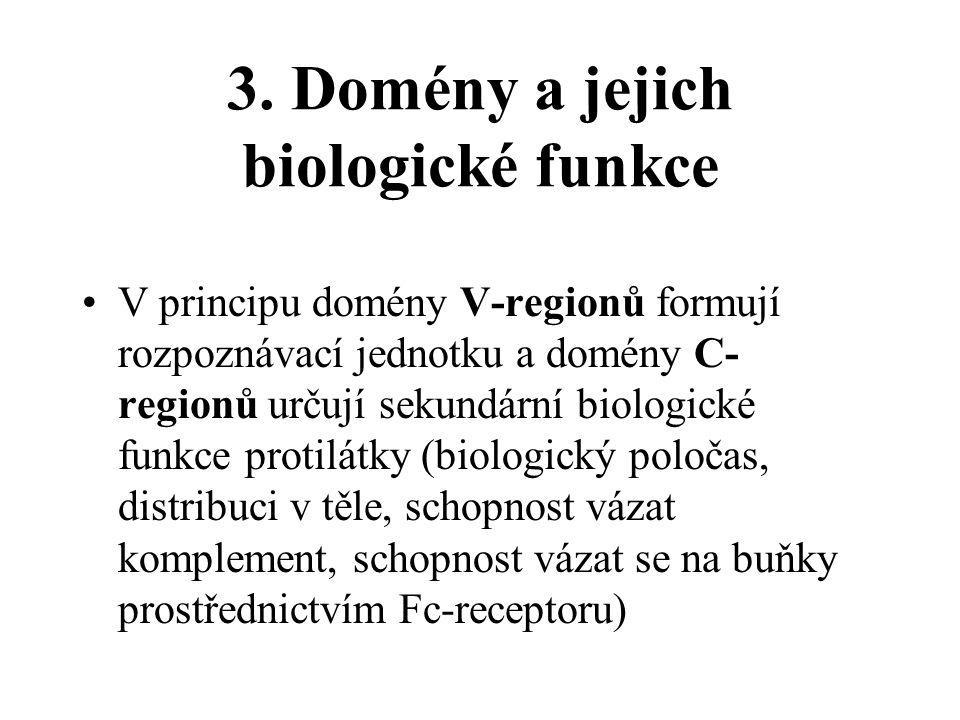 3. Domény a jejich biologické funkce V principu domény V-regionů formují rozpoznávací jednotku a domény C- regionů určují sekundární biologické funkce