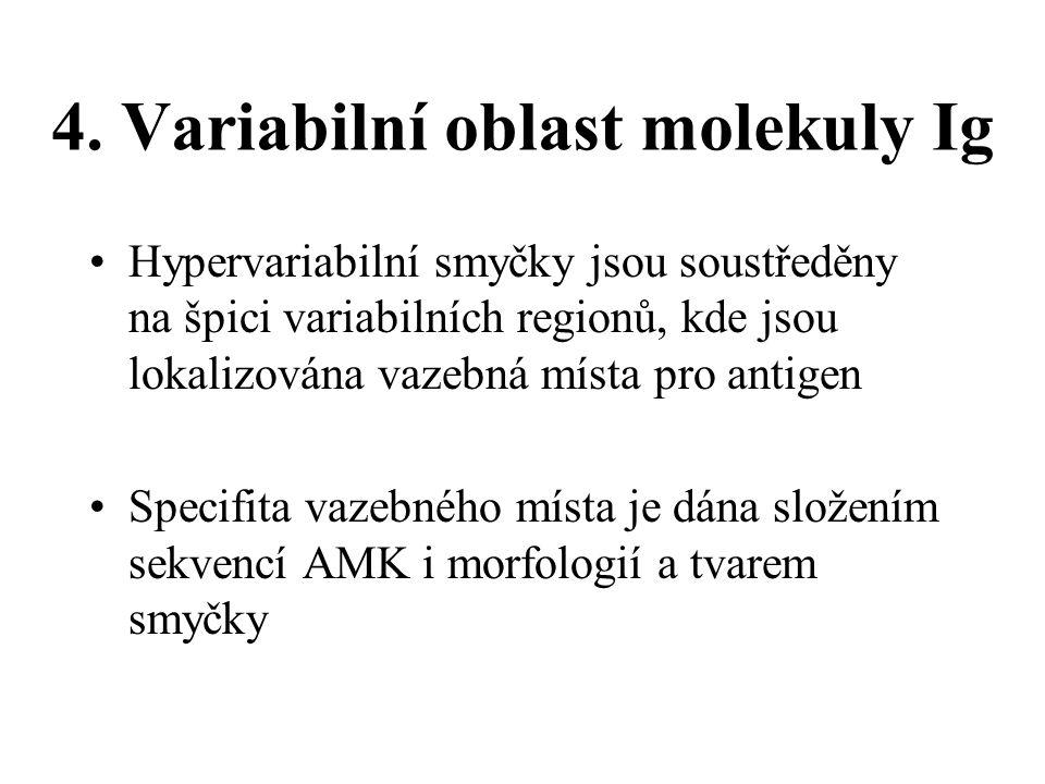 4. Variabilní oblast molekuly Ig Hypervariabilní smyčky jsou soustředěny na špici variabilních regionů, kde jsou lokalizována vazebná místa pro antige
