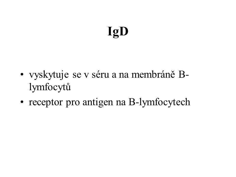 IgD vyskytuje se v séru a na membráně B- lymfocytů receptor pro antigen na B-lymfocytech