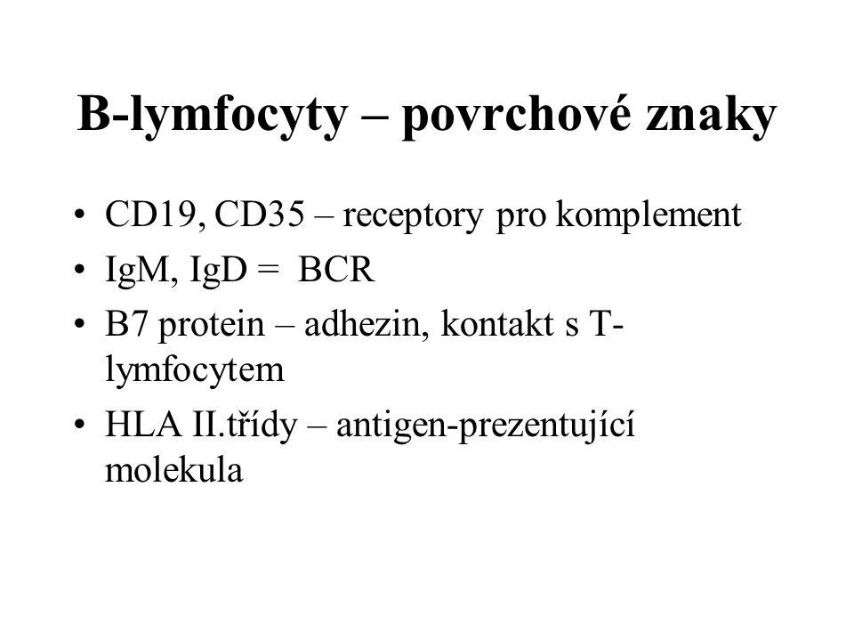 B-lymfocyty – povrchové znaky CD19, CD35 – receptory pro komplement IgM, IgD = BCR B7 protein – adhezin, kontakt s T- lymfocytem HLA II.třídy – antige
