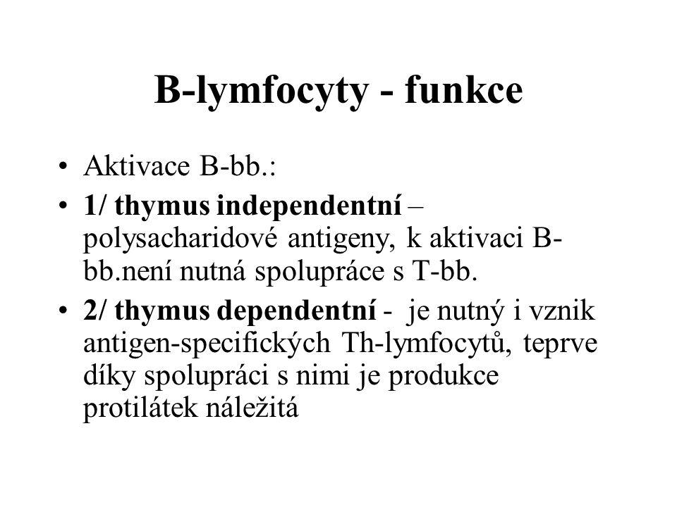 B-lymfocyty - funkce Aktivace B-bb.: 1/ thymus independentní – polysacharidové antigeny, k aktivaci B- bb.není nutná spolupráce s T-bb. 2/ thymus depe