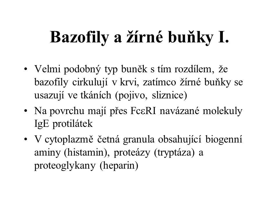 Bazofily a žírné buňky I. Velmi podobný typ buněk s tím rozdílem, že bazofily cirkulují v krvi, zatímco žírné buňky se usazují ve tkáních (pojivo, sli