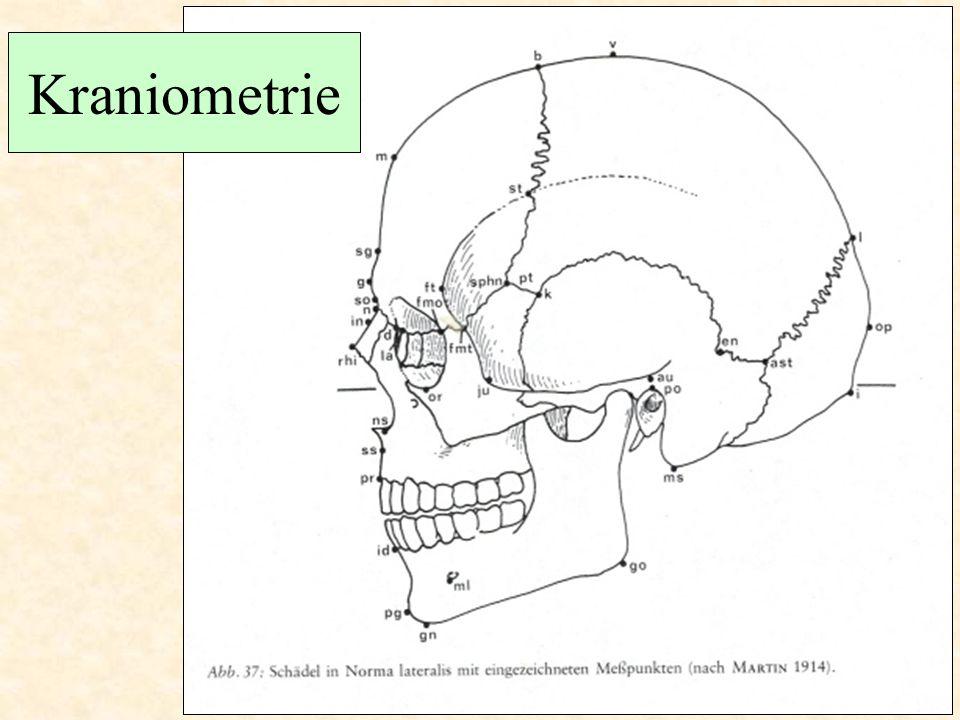 Somatometrie - hlava