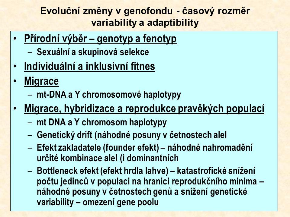 Evoluční změny v genofondu - časový rozměr variability a adaptibility Přírodní výběr – genotyp a fenotyp – Sexuální a skupinová selekce Individuální a inklusivní fitnes Migrace – mt-DNA a Y chromosomové haplotypy Migrace, hybridizace a reprodukce pravěkých populací – mt DNA a Y chromosom haplotypy – Genetický drift (náhodné posuny v četnostech alel – Efekt zakladatele (founder efekt) – náhodné nahromadění určité kombinace alel (i dominantních – Bottleneck efekt (efekt hrdla lahve) – katastrofické snížení počtu jedinců v populaci na hranici reprodukčního minima – náhodné posuny v četnostech genů a snížení genetické variability – omezení gene poolu