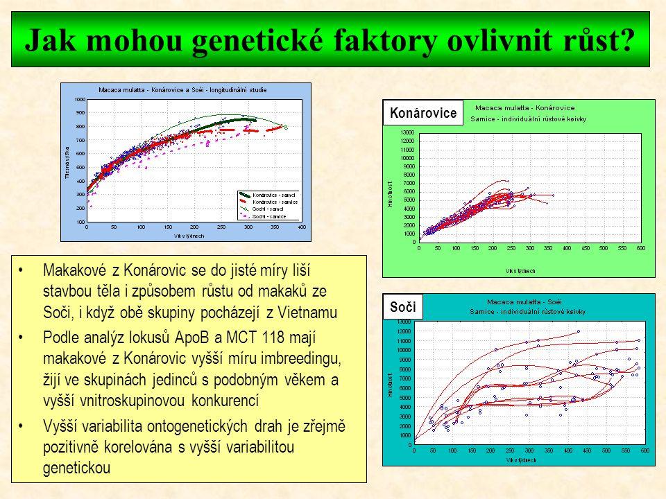 Vliv hormonů a sociální struktury na růst Kortisol Růstový hormon Vysoko postavené, velké samice Nízko postavené, menší samice Byla zjištěna dobrá kor