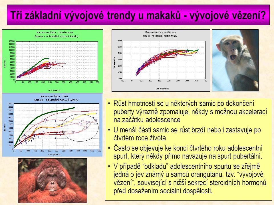 Jak mohou genetické faktory ovlivnit růst? Makakové z Konárovic se do jisté míry liší stavbou těla i způsobem růstu od makaků ze Soči, i když obě skup