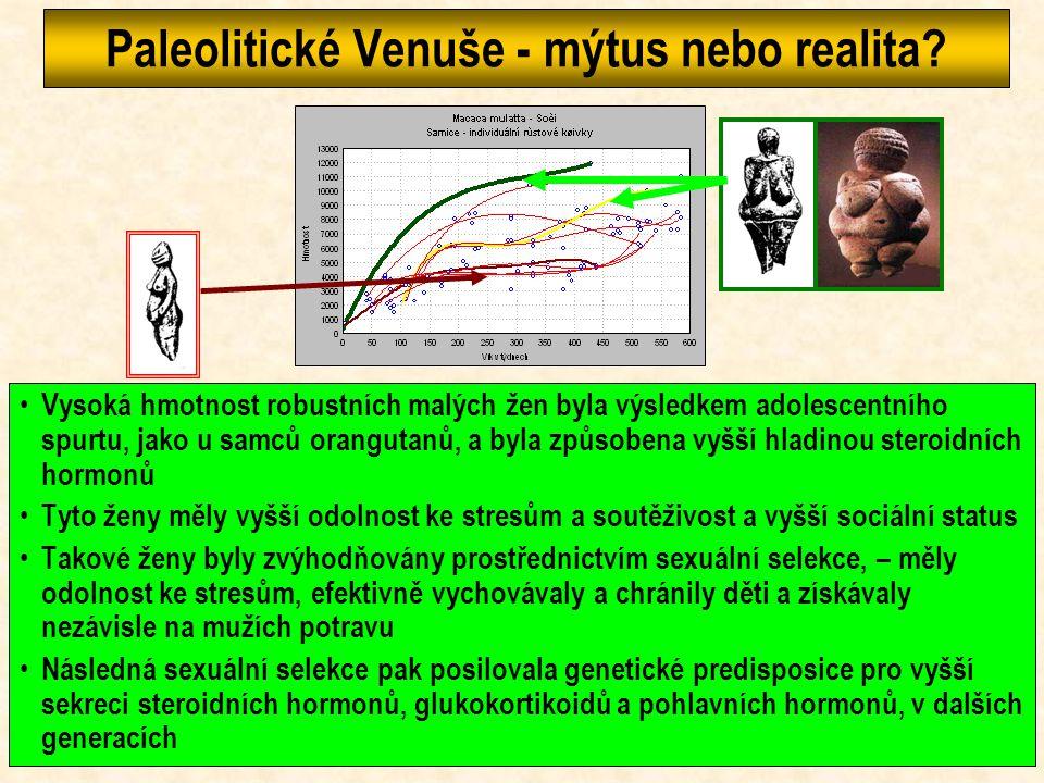 Růst lidoopů Výška se v průběhu ontogeneze mění u lidoopů podobně jako u člověka, jiné jsou proporce - trup je delší, dolní končetiny kratší Hmotnost