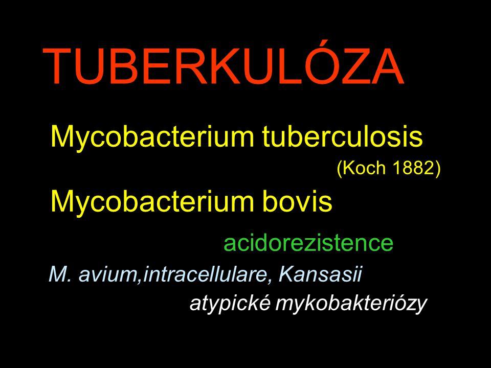 TUBERKULÓZA Mycobacterium tuberculosis (Koch 1882) Mycobacterium bovis acidorezistence M. avium,intracellulare, Kansasii atypické mykobakteriózy
