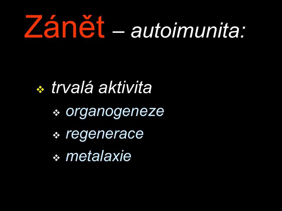 Zánět – autoimunita: v trvalá aktivita v organogeneze v regenerace v metalaxie