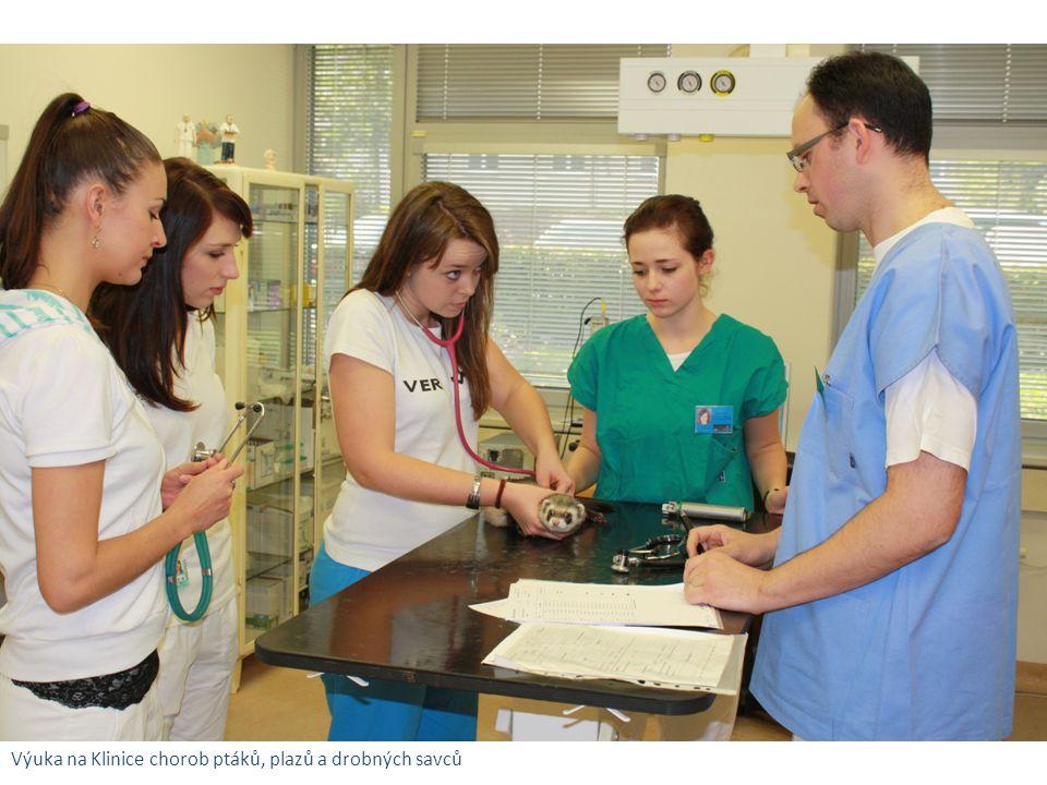 Výuka na Klinice chorob ptáků, plazů a drobných savců