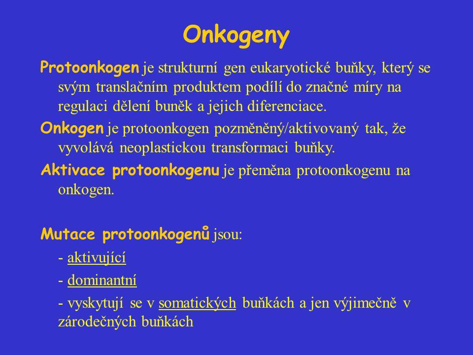 Onkogeny Protoonkogen je strukturní gen eukaryotické buňky, který se svým translačním produktem podílí do značné míry na regulaci dělení buněk a jejic