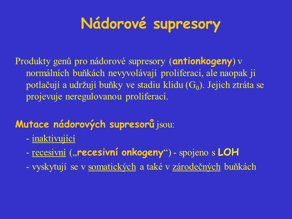 Nádorové supresory Produkty genů pro nádorové supresory ( antionkogeny ) v normálních buňkách nevyvolávají proliferaci, ale naopak ji potlačují a udržují buňky ve stadiu klidu (G 0 ).