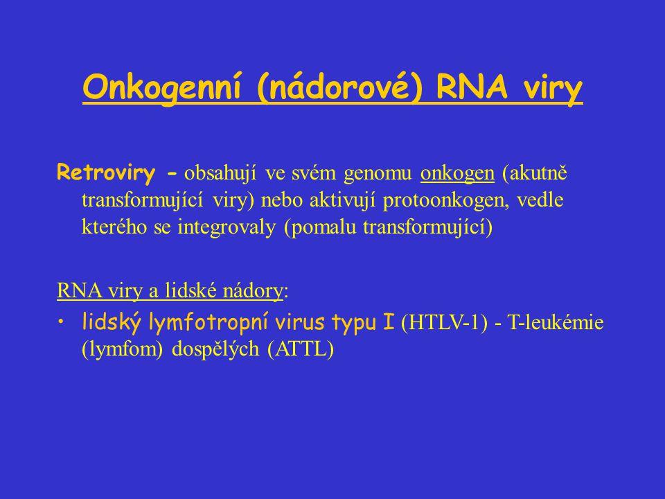 Onkogenní (nádorové) RNA viry Retroviry - obsahují ve svém genomu onkogen (akutně transformující viry) nebo aktivují protoonkogen, vedle kterého se integrovaly (pomalu transformující) RNA viry a lidské nádory: lidský lymfotropní virus typu I (HTLV-1) - T-leukémie (lymfom) dospělých (ATTL)