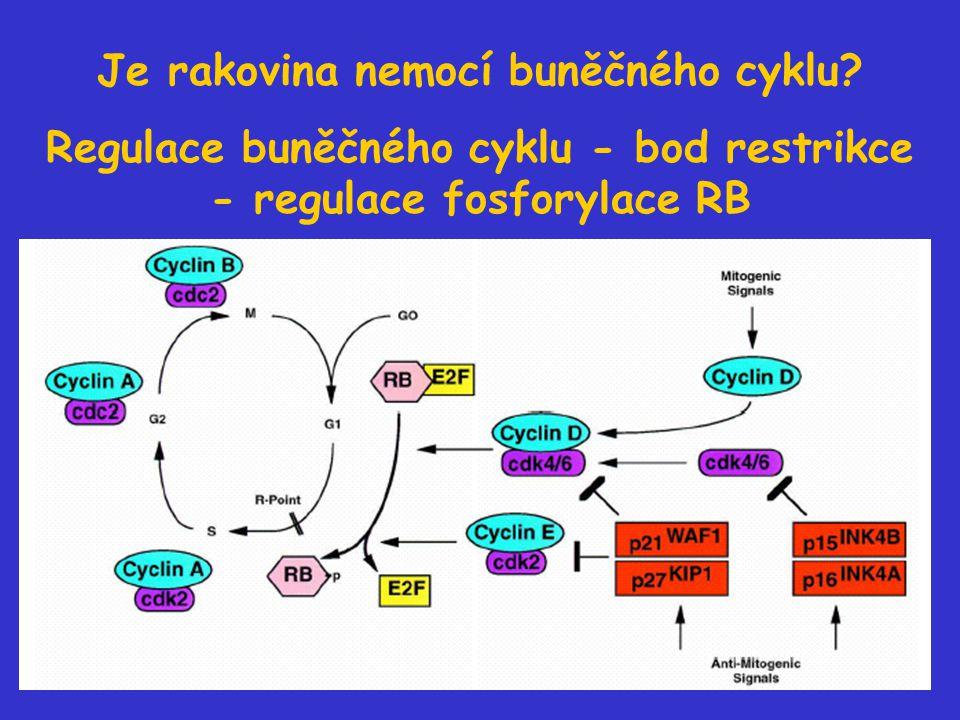 Je rakovina nemocí buněčného cyklu? Regulace buněčného cyklu - bod restrikce - regulace fosforylace RB