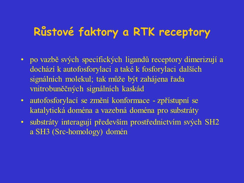 Růstové faktory a RTK receptory po vazbě svých specifických ligandů receptory dimerizují a dochází k autofosforylaci a také k fosforylaci dalších sign