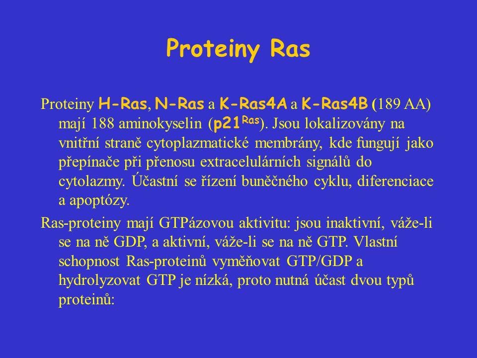 Proteiny Ras Proteiny H-Ras, N-Ras a K-Ras4A a K-Ras4B (189 AA) mají 188 aminokyselin ( p21 Ras ). Jsou lokalizovány na vnitřní straně cytoplazmatické