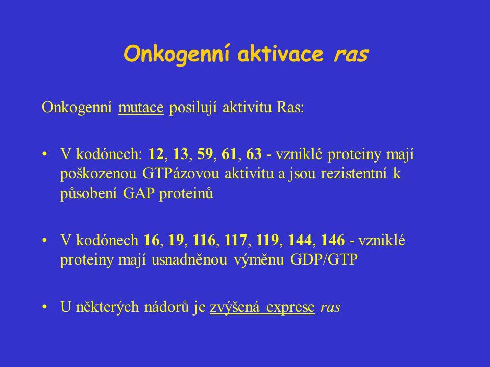 Onkogenní aktivace ras Onkogenní mutace posilují aktivitu Ras: V kodónech: 12, 13, 59, 61, 63 - vzniklé proteiny mají poškozenou GTPázovou aktivitu a