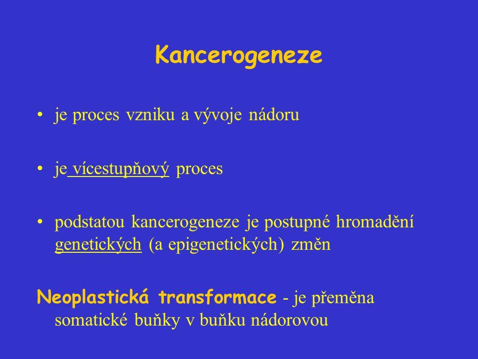 Kancerogeneze je proces vzniku a vývoje nádoru je vícestupňový proces podstatou kancerogeneze je postupné hromadění genetických (a epigenetických) změn Neoplastická transformace - je přeměna somatické buňky v buňku nádorovou
