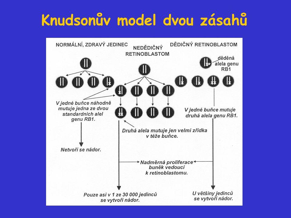 Knudsonův model dvou zásahů