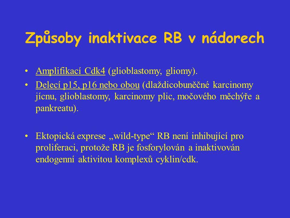 Způsoby inaktivace RB v nádorech Amplifikací Cdk4 (glioblastomy, gliomy). Delecí p15, p16 nebo obou (dlaždicobuněčné karcinomy jícnu, glioblastomy, ka