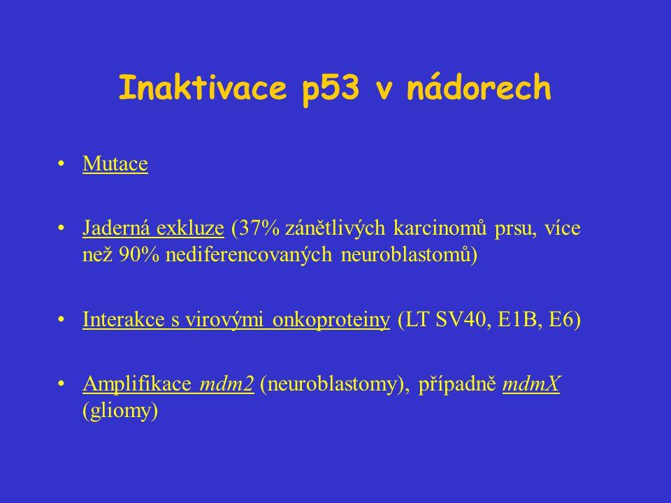 Inaktivace p53 v nádorech Mutace Jaderná exkluze (37% zánětlivých karcinomů prsu, více než 90% nediferencovaných neuroblastomů) Interakce s virovými o