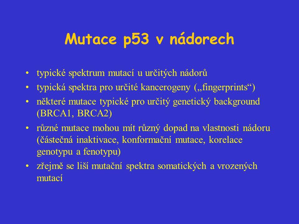 """Mutace p53 v nádorech typické spektrum mutací u určitých nádorů typická spektra pro určité kancerogeny (""""fingerprints ) některé mutace typické pro určitý genetický background (BRCA1, BRCA2) různé mutace mohou mít různý dopad na vlastnosti nádoru (částečná inaktivace, konformační mutace, korelace genotypu a fenotypu) zřejmě se liší mutační spektra somatických a vrozených mutací"""