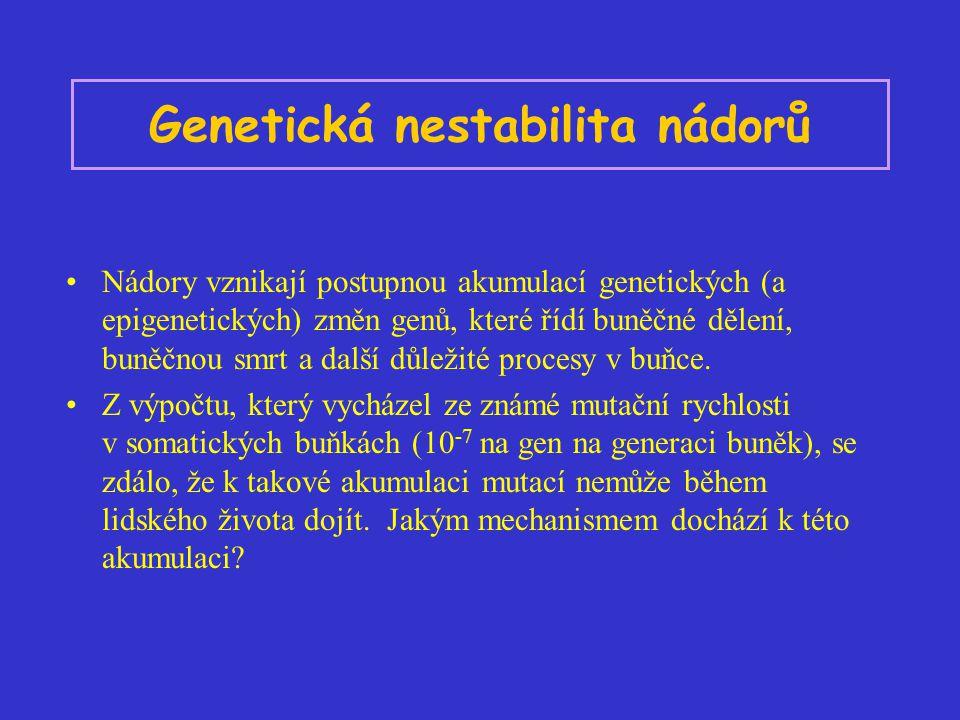 Genetická nestabilita nádorů Nádory vznikají postupnou akumulací genetických (a epigenetických) změn genů, které řídí buněčné dělení, buněčnou smrt a