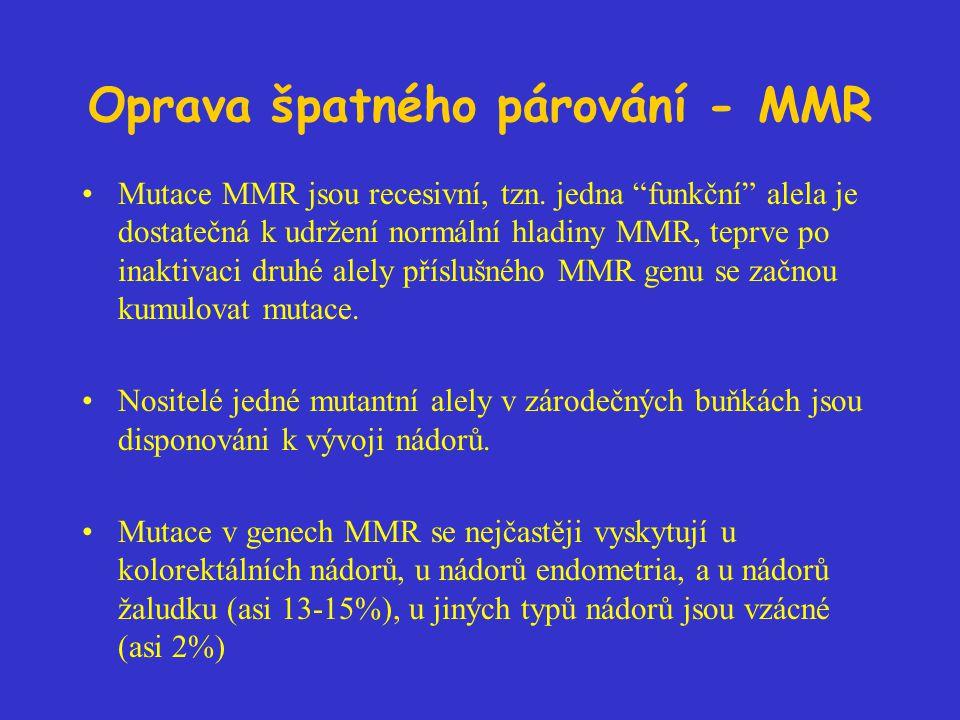 """Oprava špatného párování - MMR Mutace MMR jsou recesivní, tzn. jedna """"funkční"""" alela je dostatečná k udržení normální hladiny MMR, teprve po inaktivac"""