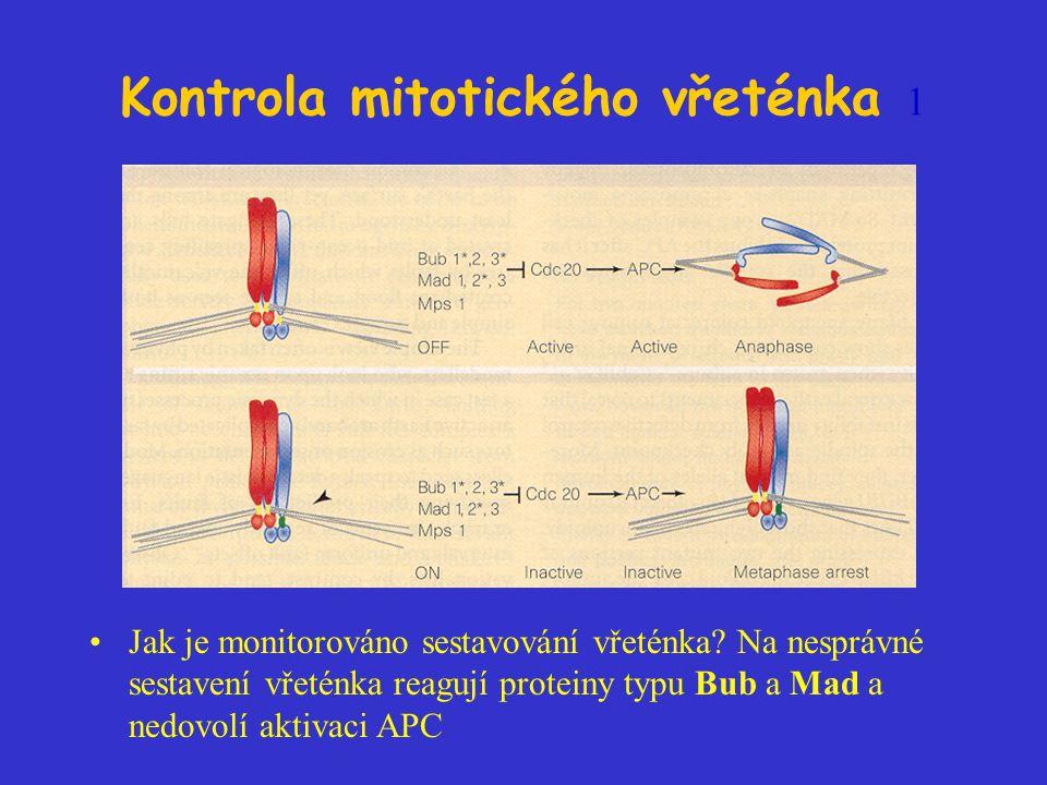 Kontrola mitotického vřeténka 1 Jak je monitorováno sestavování vřeténka? Na nesprávné sestavení vřeténka reagují proteiny typu Bub a Mad a nedovolí a