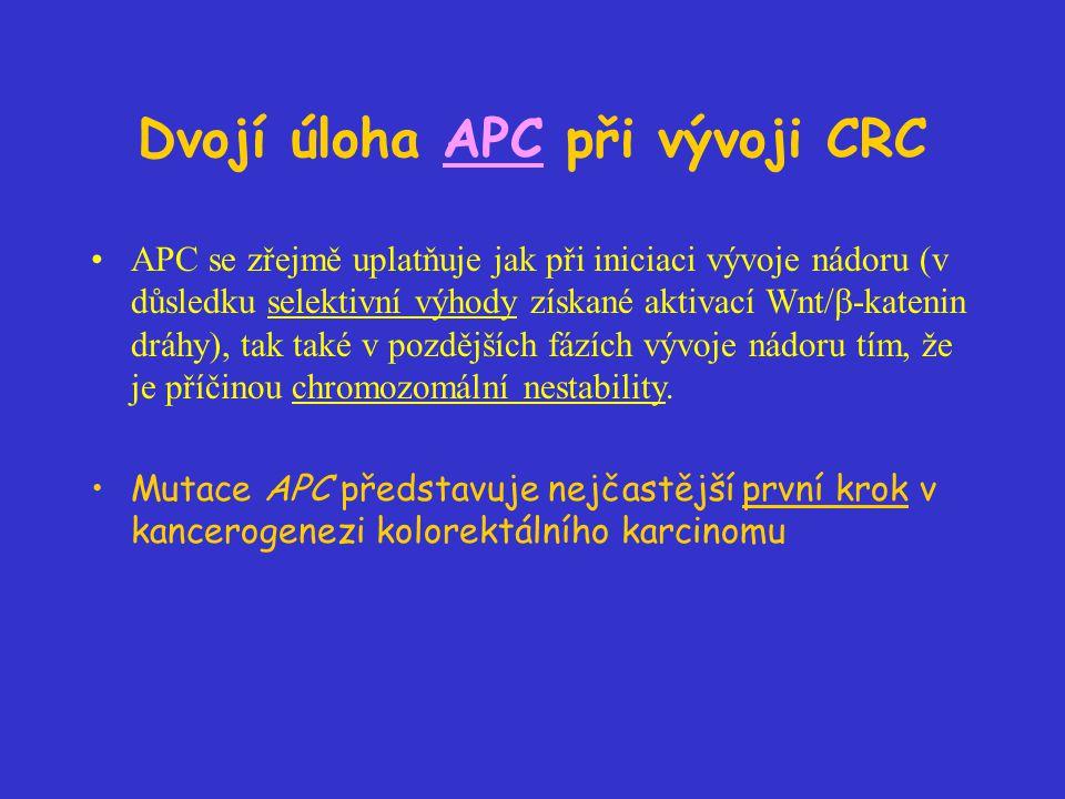Dvojí úloha APC při vývoji CRC APC se zřejmě uplatňuje jak při iniciaci vývoje nádoru (v důsledku selektivní výhody získané aktivací Wnt/  -katenin dráhy), tak také v pozdějších fázích vývoje nádoru tím, že je příčinou chromozomální nestability.