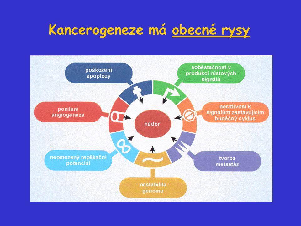 Kancerogeneze má obecné rysy