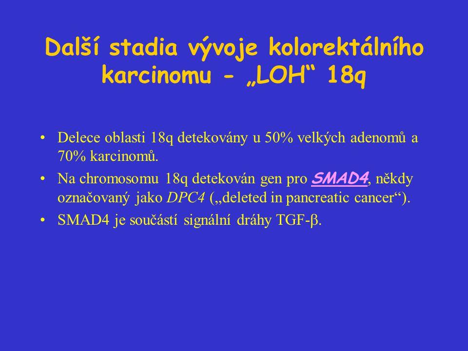 """Další stadia vývoje kolorektálního karcinomu - """"LOH"""" 18q Delece oblasti 18q detekovány u 50% velkých adenomů a 70% karcinomů. Na chromosomu 18q deteko"""