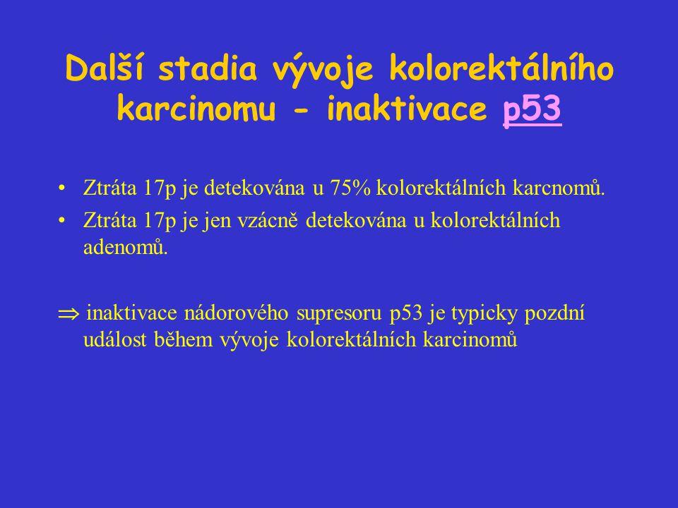 Další stadia vývoje kolorektálního karcinomu - inaktivace p53 Ztráta 17p je detekována u 75% kolorektálních karcnomů. Ztráta 17p je jen vzácně detekov