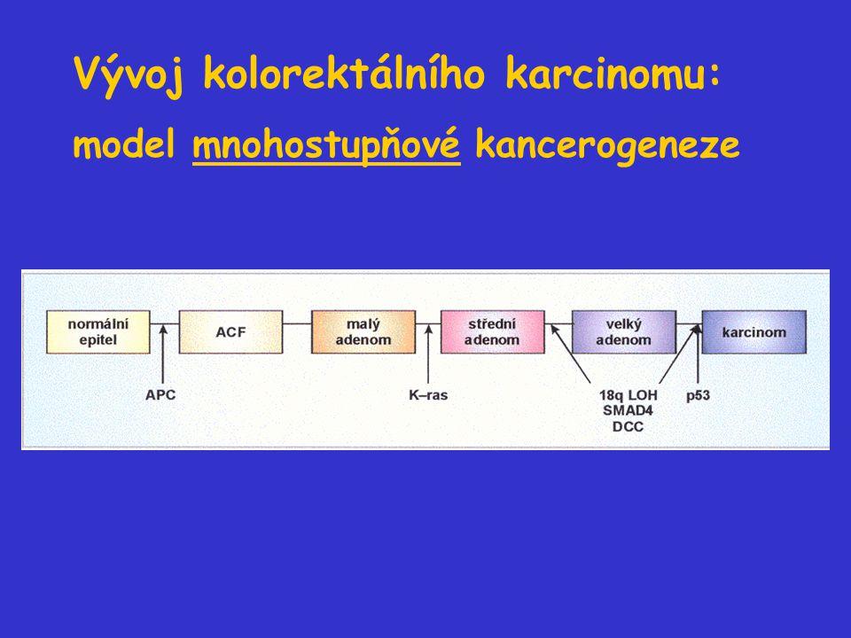 Vývoj kolorektálního karcinomu: model mnohostupňové kancerogeneze