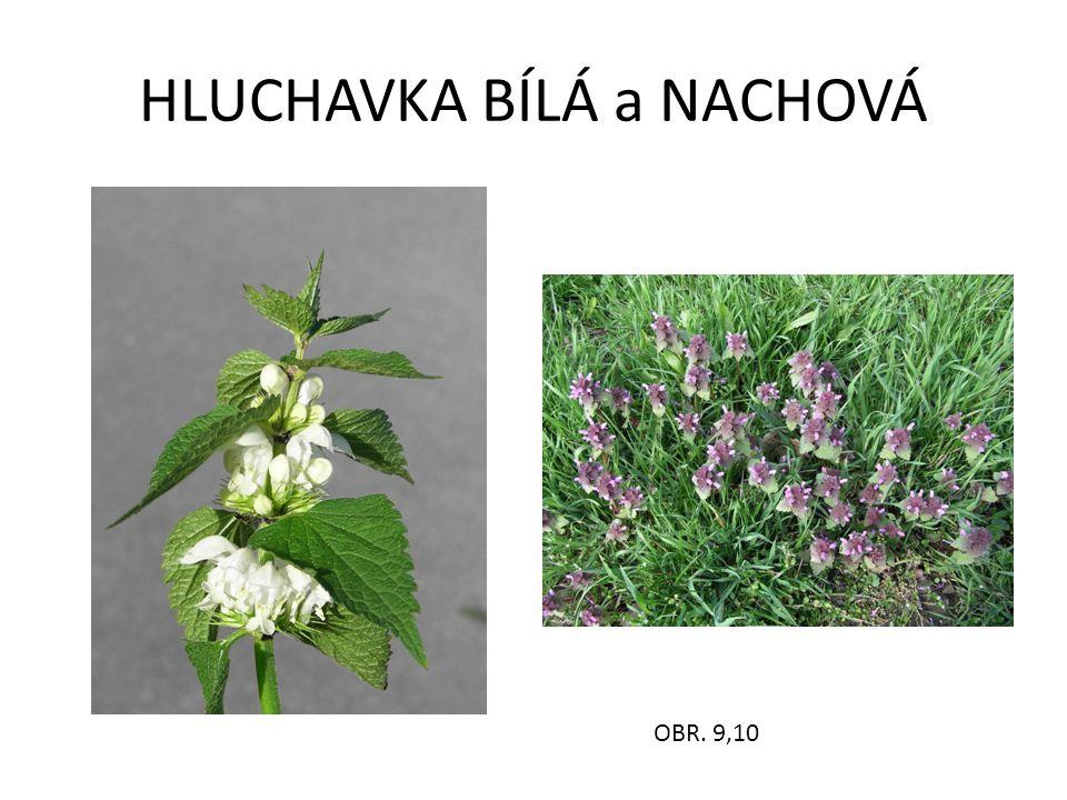 HLUCHAVKA BÍLÁ a NACHOVÁ OBR. 9,10
