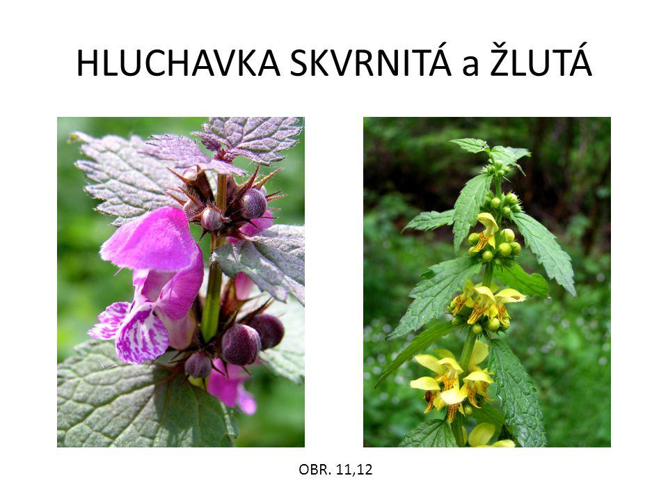 HLUCHAVKA SKVRNITÁ a ŽLUTÁ OBR. 11,12