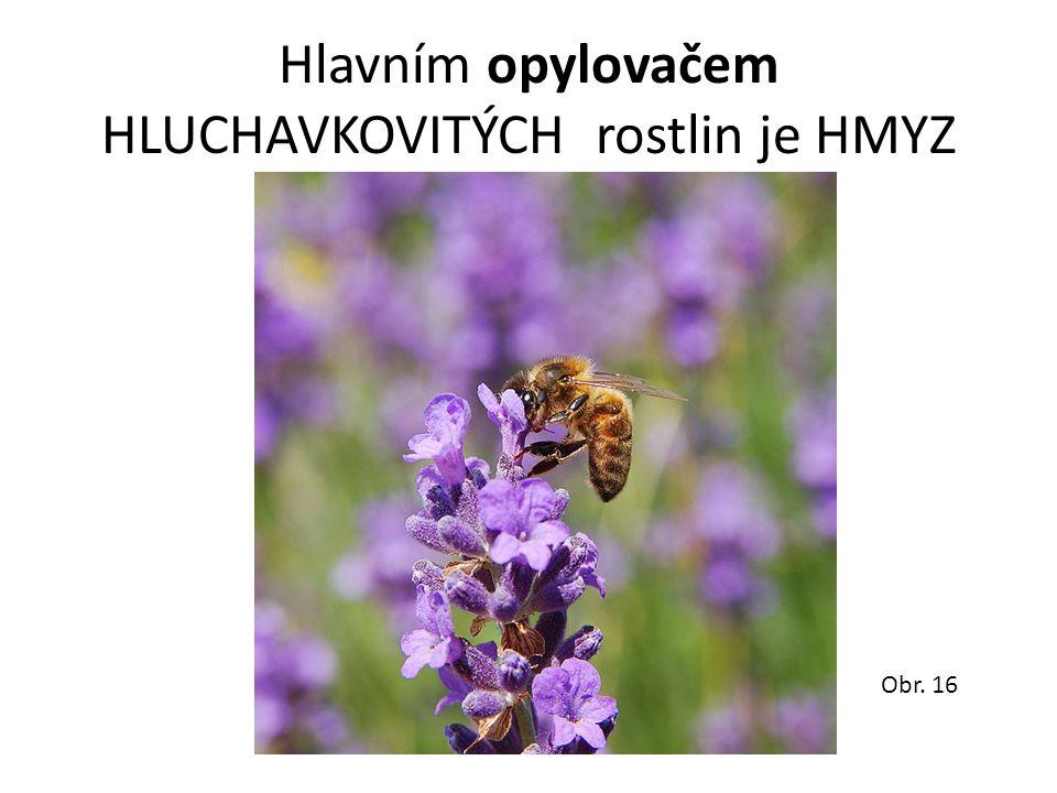 Hlavním opylovačem HLUCHAVKOVITÝCH rostlin je HMYZ Obr. 16