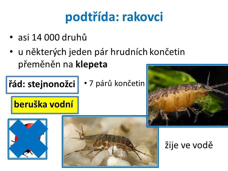 podtřída: rakovci asi 14 000 druhů u některých jeden pár hrudních končetin přeměněn na klepeta řád: stejnonožci beruška vodní žije ve vodě 7 párů konč