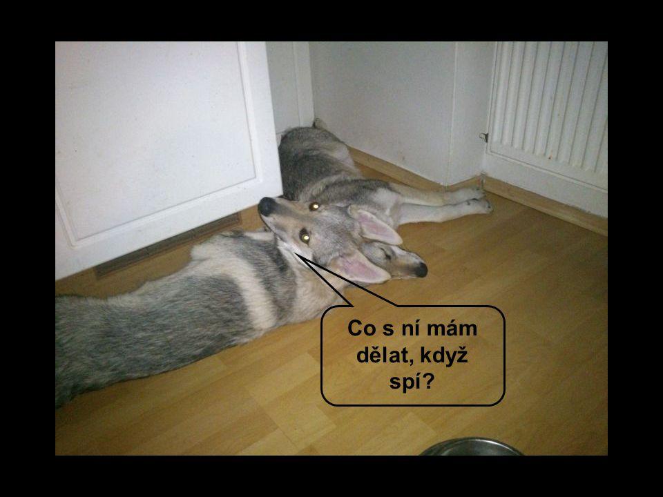 Tiše tiše vlci spí, kdo je vzbudí, toho sní
